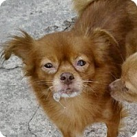 Adopt A Pet :: Mollie - West Palm Beach, FL