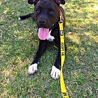 Adopt A Pet :: Doc - Tempe, AZ