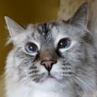 Adopt A Pet :: Angel - Verona, WI