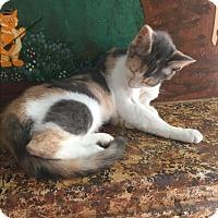 Adopt A Pet :: Heather - Tarboro, NC
