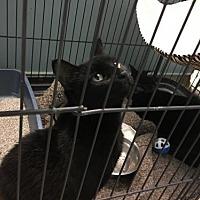 Adopt A Pet :: Brooke and Clara - Rockaway, NJ