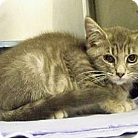 Adopt A Pet :: Spalding - Dover, OH