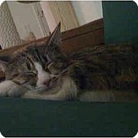 Adopt A Pet :: Desi - Quincy, MA