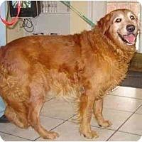 Adopt A Pet :: Marshall - Cumming, GA