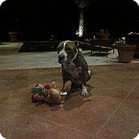 Adopt A Pet :: Murrow - Geismar, LA
