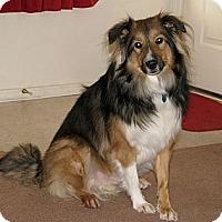 Adopt A Pet :: Nicco - apache junction, AZ