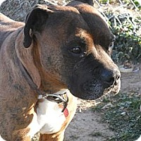 Adopt A Pet :: Howie #5242 - Jerome, ID