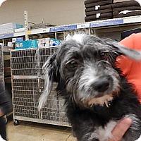 Adopt A Pet :: Molly - Tucson, AZ