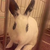 Adopt A Pet :: Sandy - Maple Shade, NJ