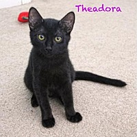 Adopt A Pet :: Theadora - Walnut Creek, CA