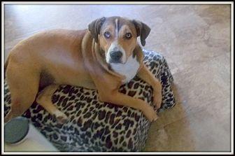 Beagle/Labrador Retriever Mix Dog for adoption in Girard, Georgia - Serena