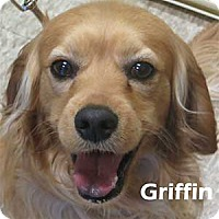 Adopt A Pet :: Griffin - Warren, PA