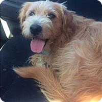 Adopt A Pet :: Grizzly - Encino, CA