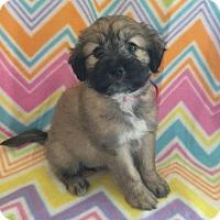 Adopt A Pet :: Joanie/Jojo - League City, TX