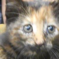 Adopt A Pet :: lilith - Opelousas, LA