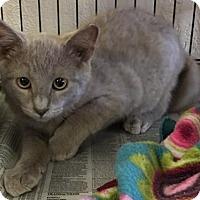 Adopt A Pet :: Rowan - Pendleton, NY