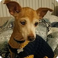 Adopt A Pet :: Frankie - Chico, CA
