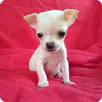 Adopt A Pet :: Thumbelina - Lawrenceville, GA