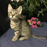 Adopt A Pet :: Diana - Fayetteville, GA