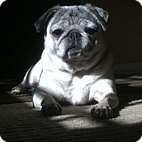 Adopt A Pet :: Lola - Avondale, PA