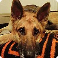 Adopt A Pet :: Tyko - Green Cove Springs, FL