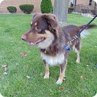 Adopt A Pet :: Charlie - Evergreen Park, IL