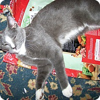 Adopt A Pet :: Queso - St. Louis, MO