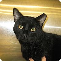 Adopt A Pet :: AL - Hamilton, NJ