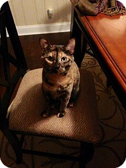 Calico Cat for adoption in Smyrna, Georgia - Noelle
