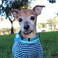 Adopt A Pet :: Macaroni - Rancho Palos Verdes, CA