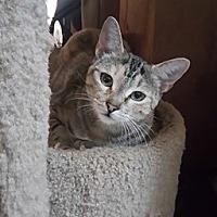 Adopt A Pet :: Gamela - San Diego, CA