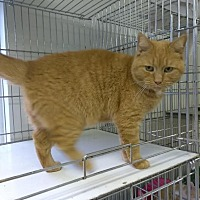 Adopt A Pet :: TAMALI! - Owenboro, KY