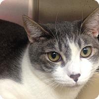 Adopt A Pet :: Belle - Newport Beach, CA