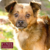Adopt A Pet :: Seamus - Marina del Rey, CA
