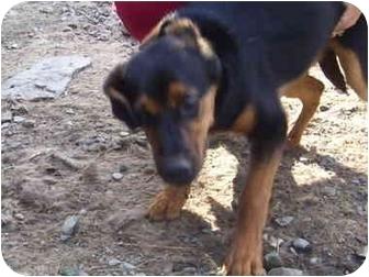 Hound (Unknown Type) Mix Dog for adoption in Millerton, Pennsylvania - George