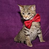 Adopt A Pet :: Levi (Neutered) - Marietta, OH