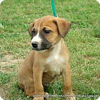 Adopt A Pet :: Travis/Adopted - PRINCETON, KY
