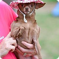 Adopt A Pet :: Tater - Virginia Beach, VA