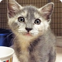 Adopt A Pet :: Breeze - Grants Pass, OR