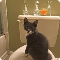 Adopt A Pet :: Andy - Baltimore, MD