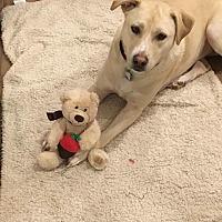 Adopt A Pet :: Levi - Acushnet, MA