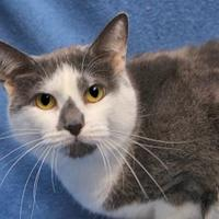 Adopt A Pet :: Madeline 125 - Mentor, OH