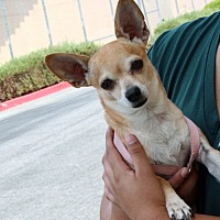 Adopt A Pet :: Chris - Palmdale, CA