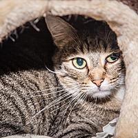 Adopt A Pet :: Beau - Martinsville, IN