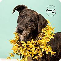 Adopt A Pet :: Nora - Cincinnati, OH