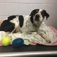 Adopt A Pet :: George - Toronto, ON