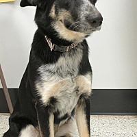 Adopt A Pet :: Chanel - Conroe, TX