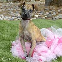 Adopt A Pet :: ROSE - Albuquerque, NM
