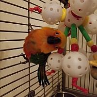 Adopt A Pet :: Cory - Redlands, CA