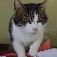 Adopt A Pet :: Frankie - Nashville, IN